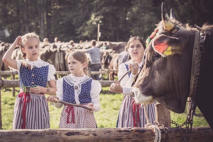 Drei Mädchen in Tracht stehen vor einem Stier.