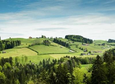grüne Wiesen mit Hecken.