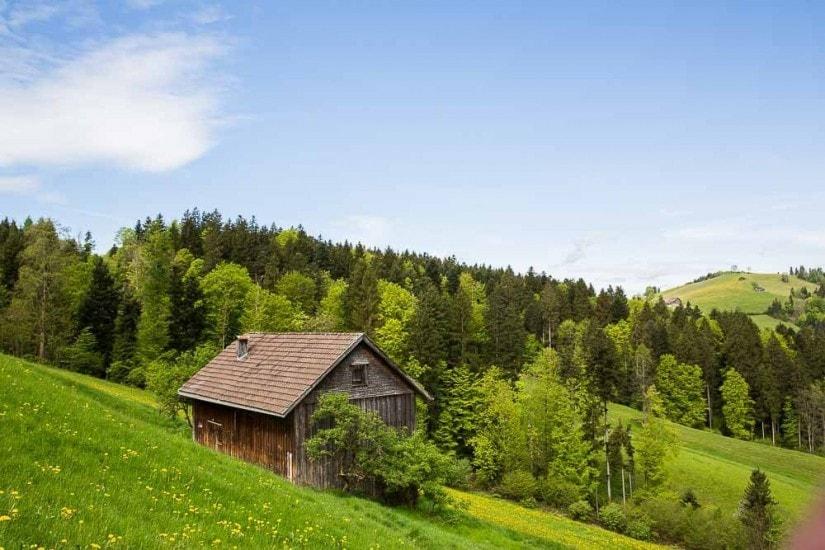 Scheune auf einer Wiese, Wald im Hintergrund.